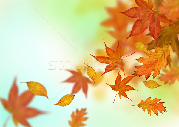 Autumn Leaves Falling Stock photo © solarseven
