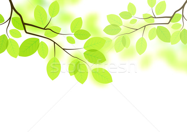 Vector Leaves Background Stock photo © solarseven