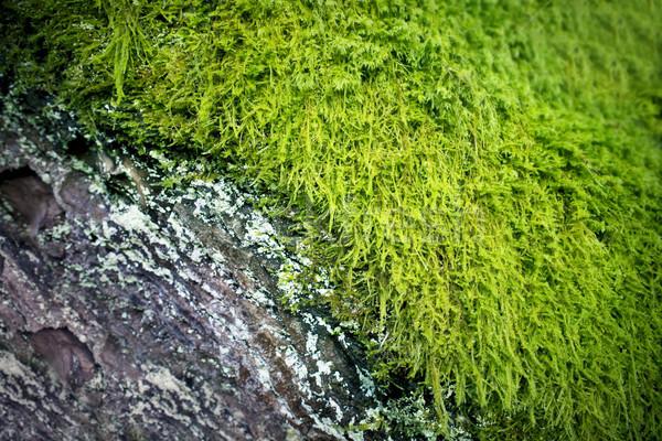 Rústico edad corteza verde musgo madera Foto stock © solarseven