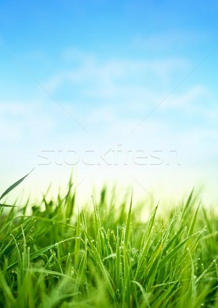 Fresh Spring Grass Stock photo © solarseven