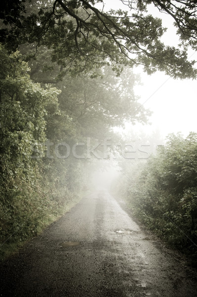 Misty pays arbre nuages Photo stock © solarseven