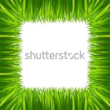 Keret keret zöld fű izolált fehér fű Stock fotó © sonia_ai