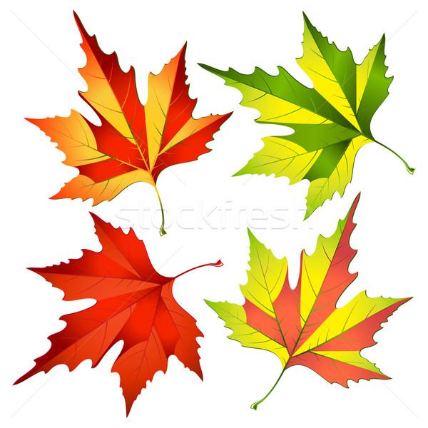autumn leafs Stock photo © sonia_ai
