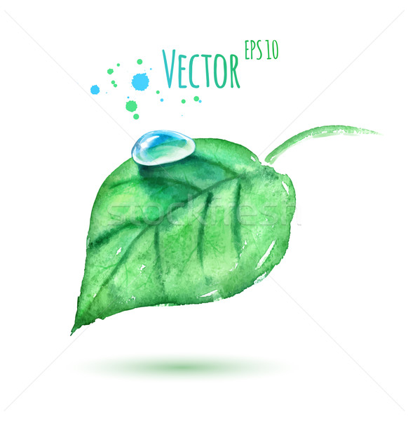 Watercolor leaf with water drop. Stock photo © Sonya_illustrations
