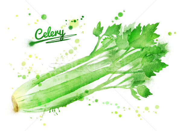 Watercolor celery. Stock photo © Sonya_illustrations