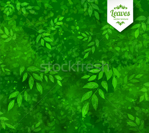 Сток-фото: весны · лет · вектора · Гранж · зеленый · акварель