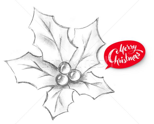 Pencil illustration of Christmas Holly. Stock photo © Sonya_illustrations
