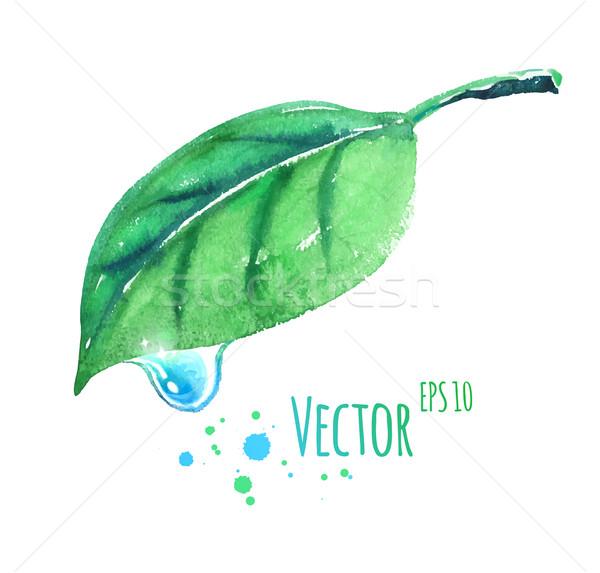 Wasserfarbe Blatt Wassertropfen Vektor Illustration green leaf Stock foto © Sonya_illustrations