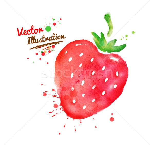 Сток-фото: акварель · клубника · вектора · рисованной · продовольствие · краской