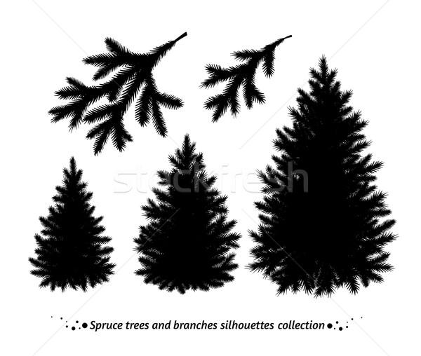 Lucfenyő fák sziluettek ágak sziluett vektor Stock fotó © Sonya_illustrations