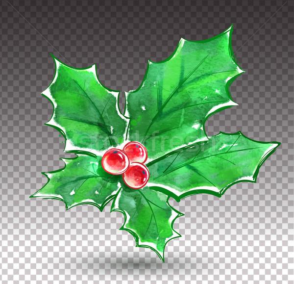 Christmas holly.  Stock photo © Sonya_illustrations