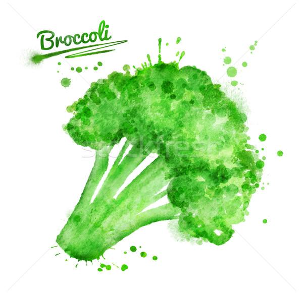 Aquarela brócolis ilustração pintar Foto stock © Sonya_illustrations