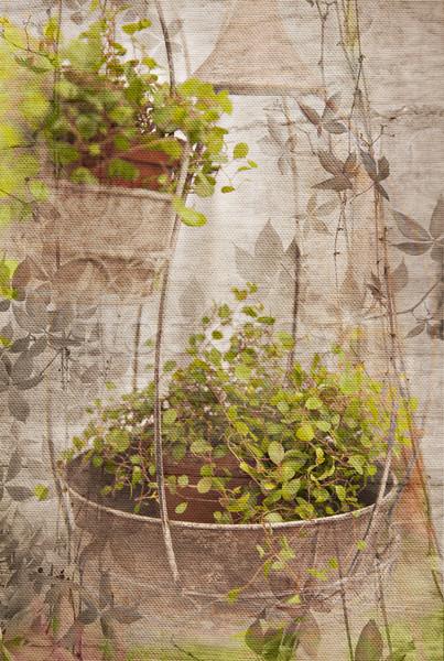 Vintage цветочный печать изображение саду подвесной Сток-фото © sophie_mcaulay