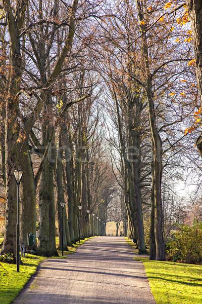 Empty public park Stock photo © sophie_mcaulay