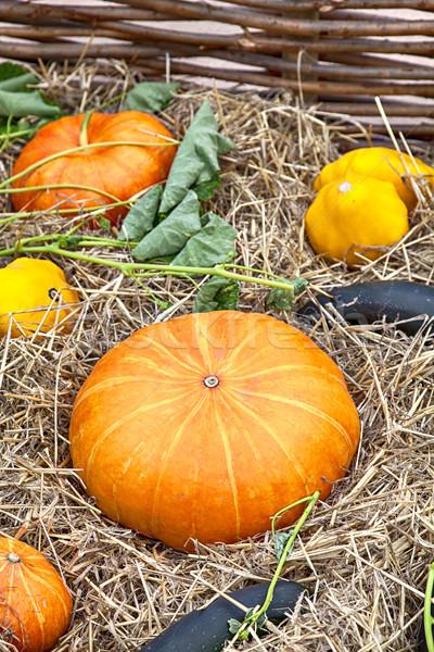 Zucchini and pumpkins Stock photo © sophie_mcaulay