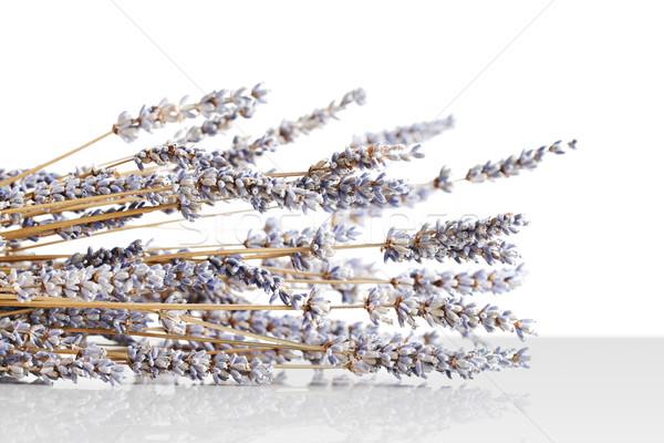 Harvested, dried lavender bouquet Stock photo © SophieJames
