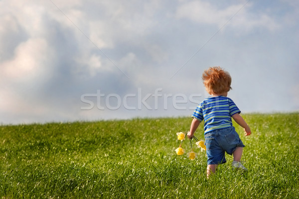 Young  boy holding a bouquet of daffodils walking up a hill Stock photo © soupstock
