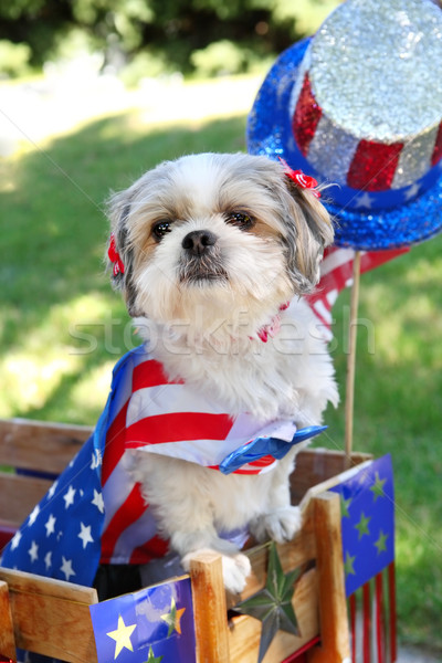 Dog dressed up for a 4th of July parade Stock photo © soupstock
