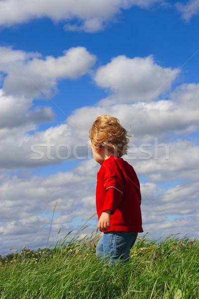 Permanente veld hemel zomer Maakt een reservekopie Stockfoto © soupstock
