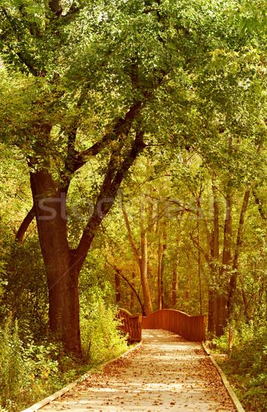 Pad bos boom houten brug natuur Stockfoto © soupstock