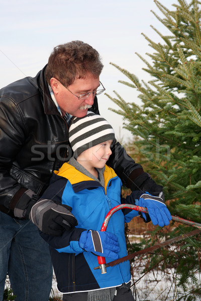 Man cutting a Christmas Tree with his son Stock photo © soupstock