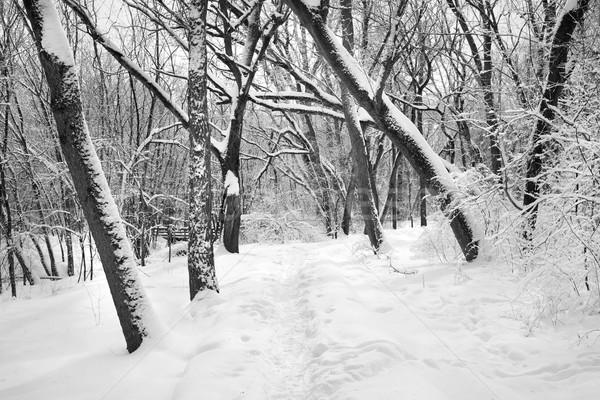 út tél erdő hó fedett fák Stock fotó © soupstock