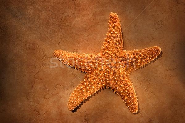 Starfish Stock photo © soupstock