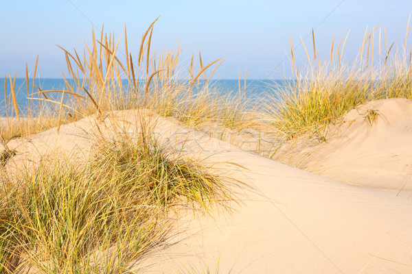 Beach in New Buffalo, Michigan Stock photo © soupstock