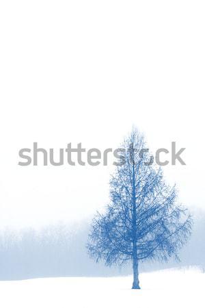 Winter pijnboom sneeuw gedekt witte boom Stockfoto © soupstock