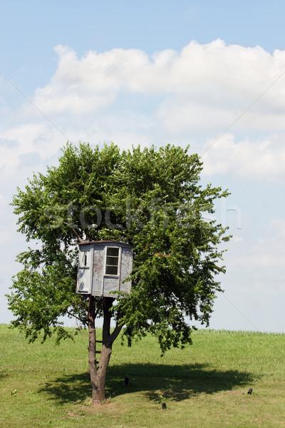 Uciec drzewo dziedzinie niebo domu chmury Zdjęcia stock © soupstock