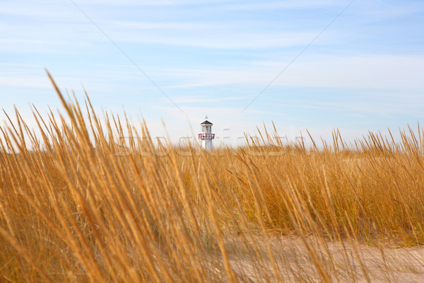 Playa nuevos Michigan tiro dorado duna Foto stock © soupstock