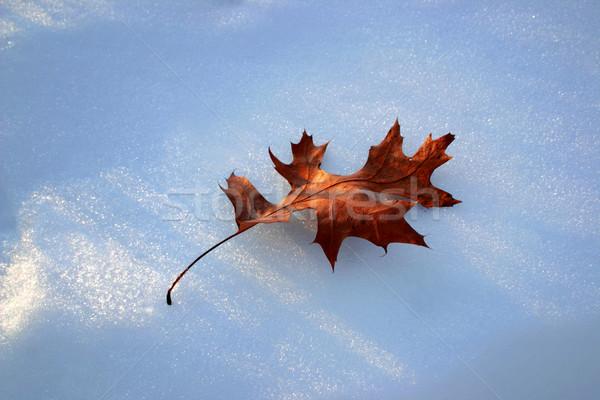 Eiken blad sneeuw najaar schoonheid winter Stockfoto © soupstock