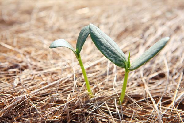 New growth Stock photo © soupstock