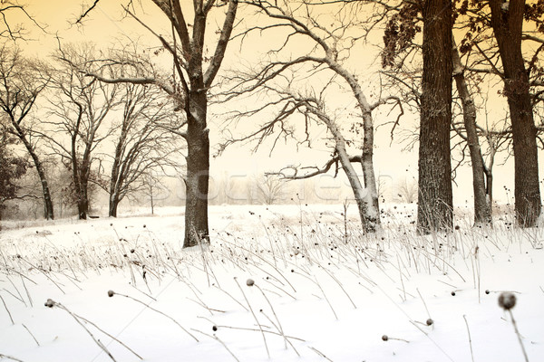 Winter bomen winterlandschap gouden gloed landschap Stockfoto © soupstock