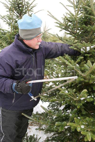 Uomo albero di natale taglio giù inverno Foto d'archivio © soupstock