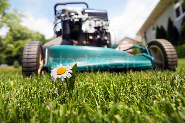 Fűnyíró közelkép vág virág fű munka Stock fotó © soupstock