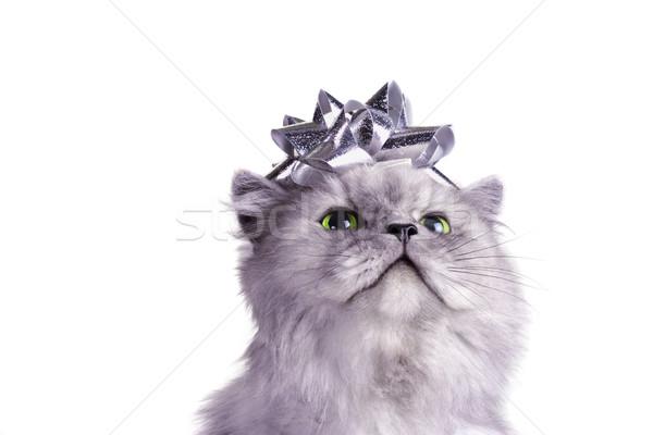 Natale regalo grigio gatto persiano argento arco Foto d'archivio © soupstock