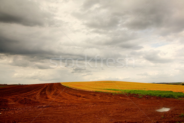 Plowed field after a rain storm Stock photo © soupstock