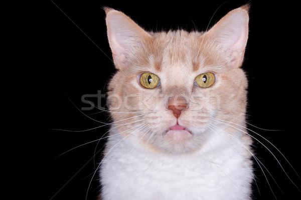 Primo piano cat faccia arancione bocca Foto d'archivio © soupstock