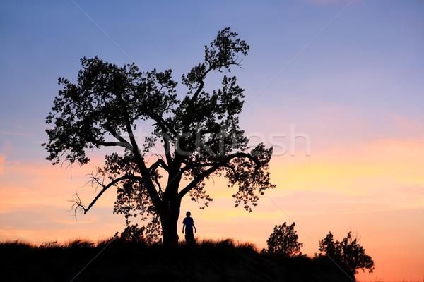 Stock fotó: Dűne · naplemente · fiatal · srác · fa · természet · nyár