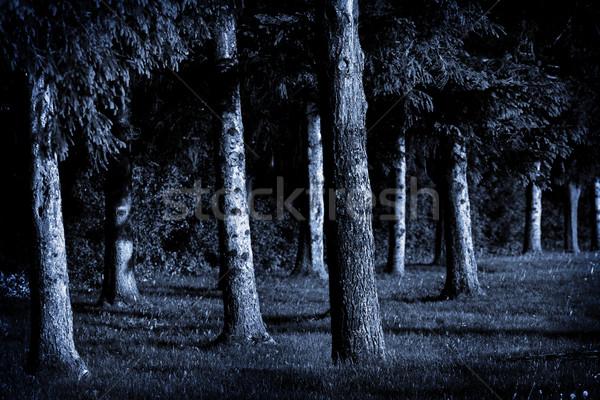 Moonlight Pines Stock photo © soupstock