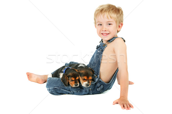 Young boy sitting with Beagle puppies on his lap Stock photo © soupstock