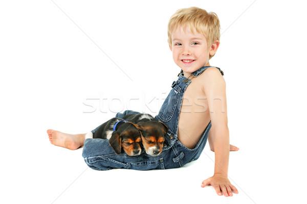 сидят Beagle щенки два спальный Сток-фото © soupstock