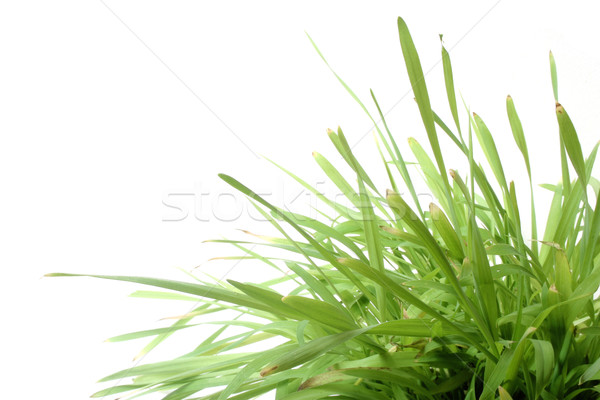 Herbe blanche naturelles golf soleil jardin Photo stock © spanishalex
