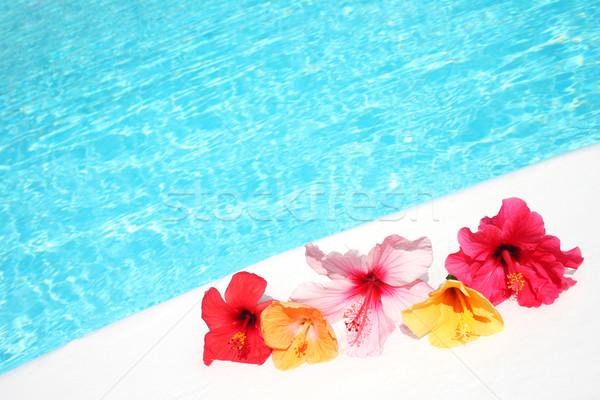 Fleurs piscine hibiscus lumineuses nature bain Photo stock © spanishalex