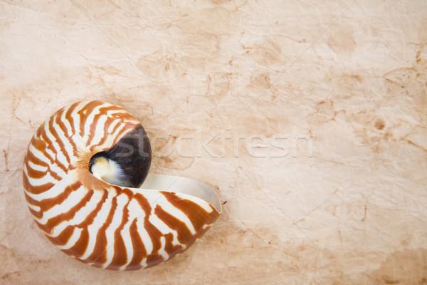 Nautilus On Old Paper Stock photo © spanishalex