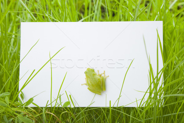 Stock photo: White card in grass with a tree frog