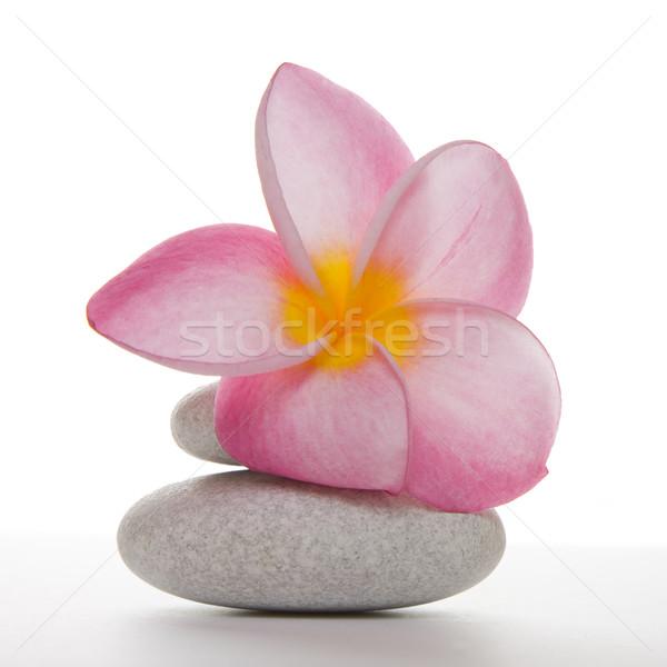 Fleur blanche cailloux rose deux isolé Photo stock © spanishalex