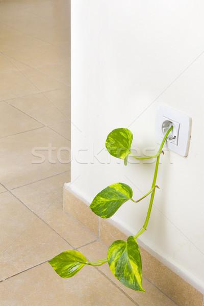 Vert pouvoir fraîches croissant sur électricité Photo stock © spanishalex