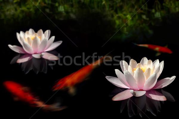 Bloemen goudvis donkere zwembad bank bloem Stockfoto © spanishalex